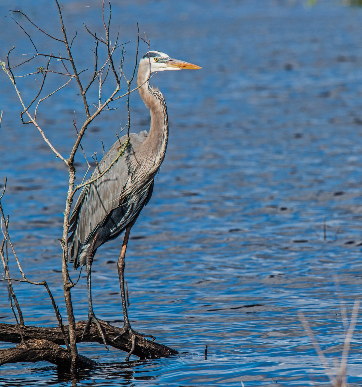 056-GBH-branch-over-water-(3)-f.jpg