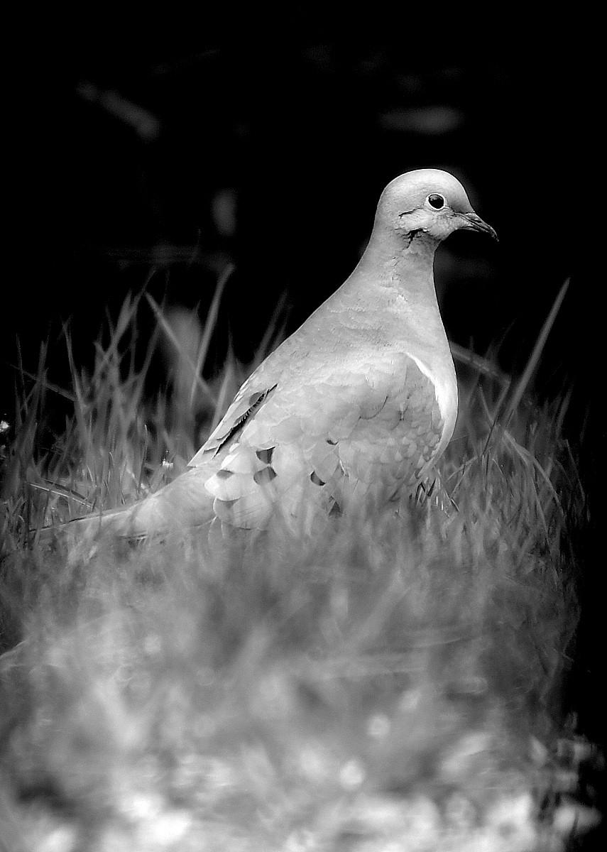 1-1-birds 059-002.JPG