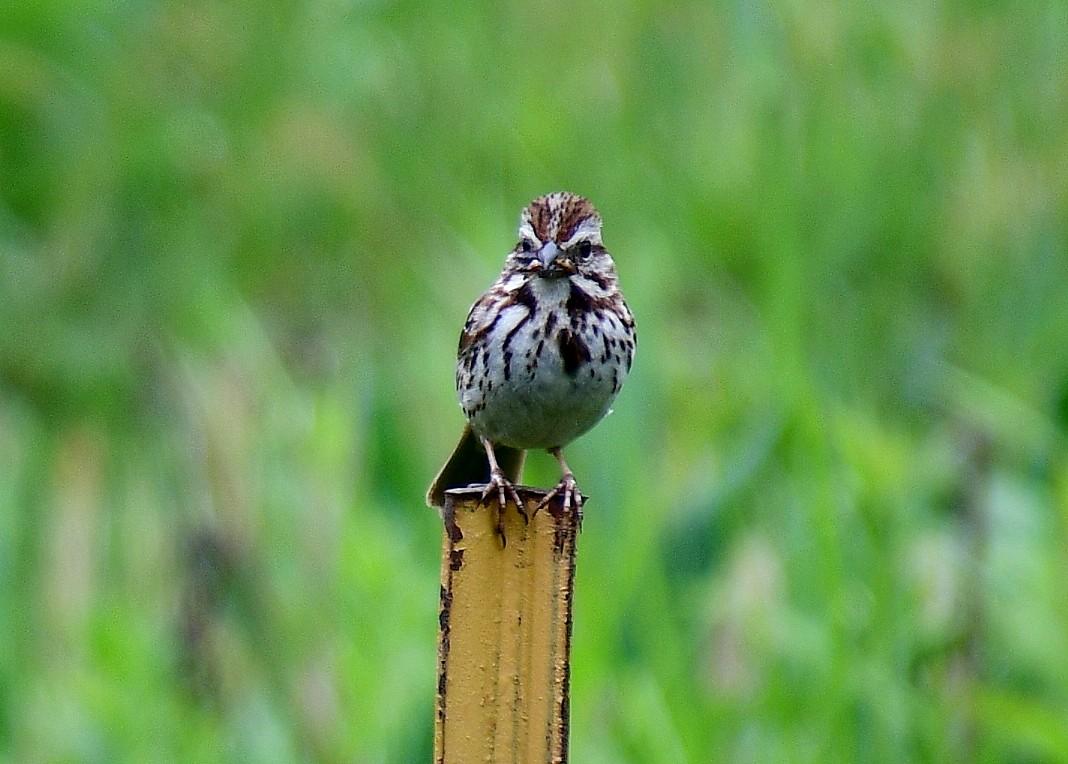 1-bird 004.JPG