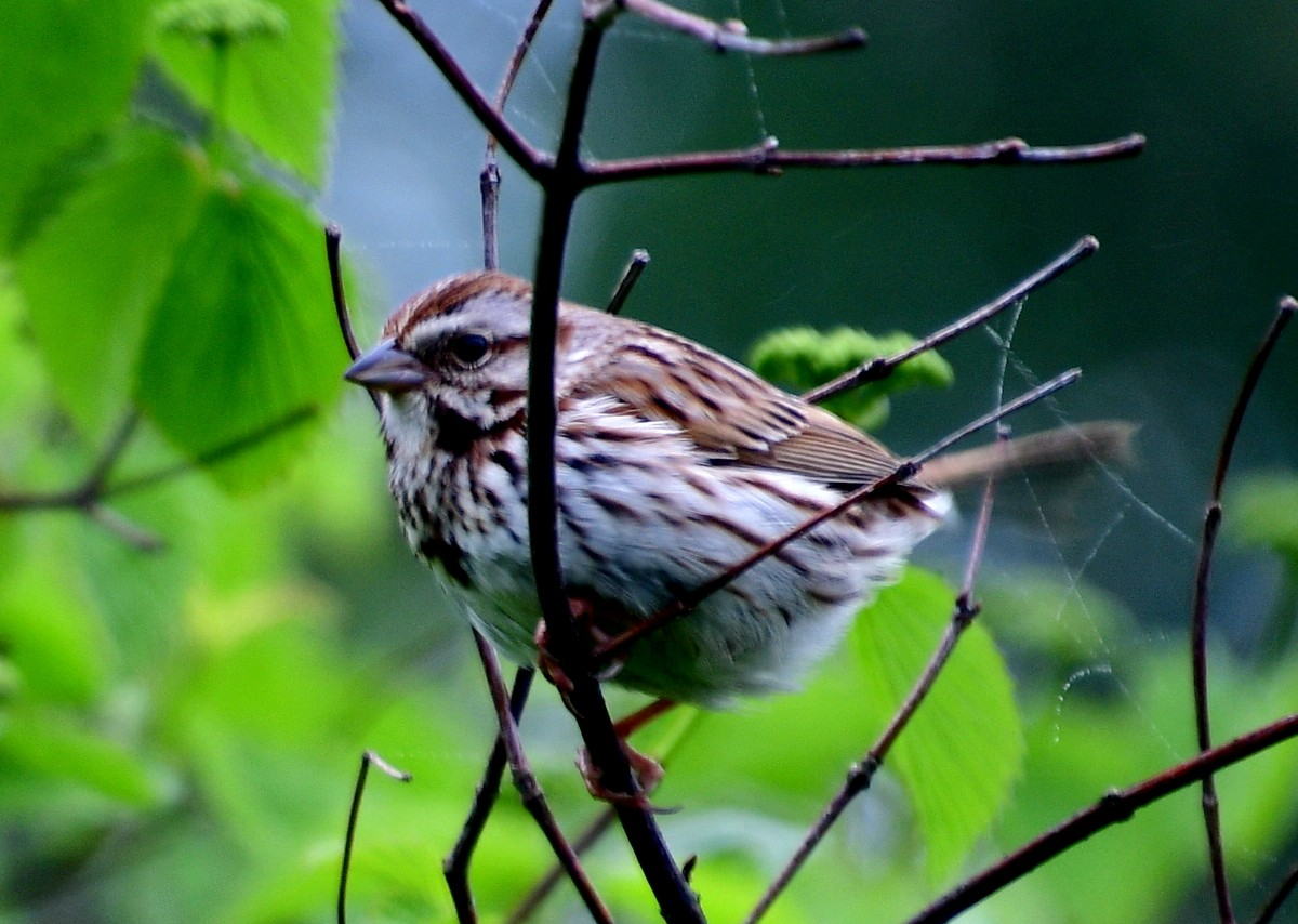 1-bird 020.JPG