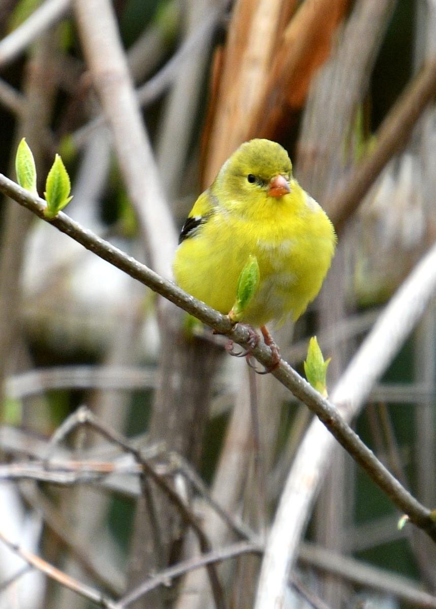 1-birds 010-001.JPG