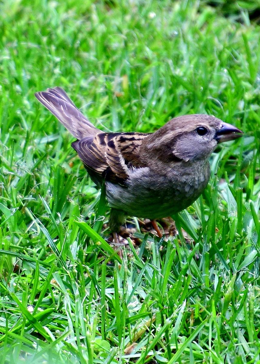 1-birds 012-003.JPG