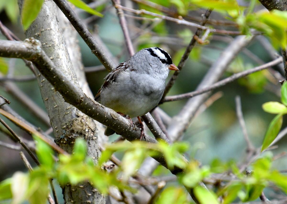 1-birds 015-003.JPG