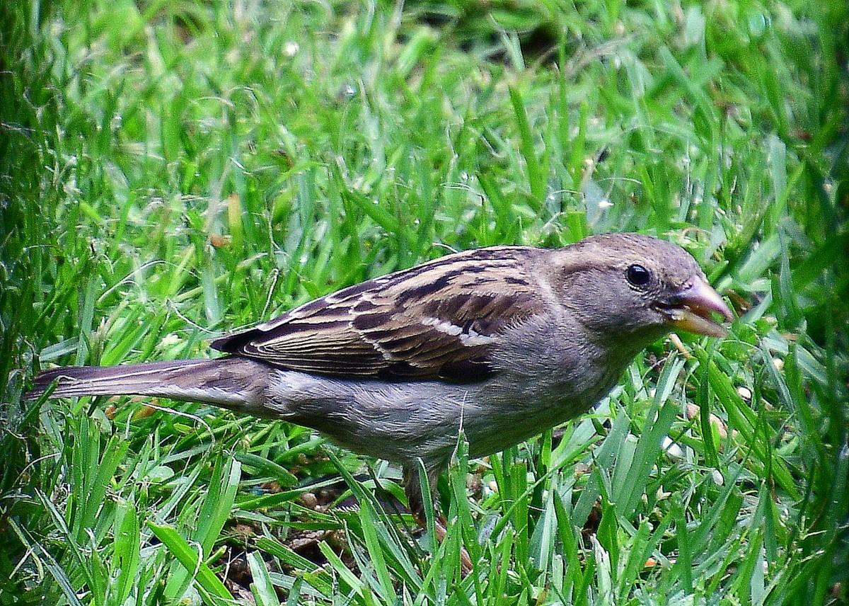 1-birds 017-004.JPG