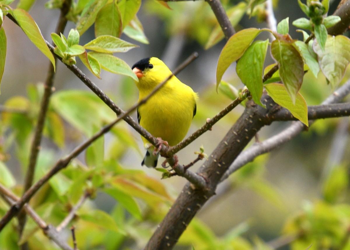 1-birds 019-003.JPG