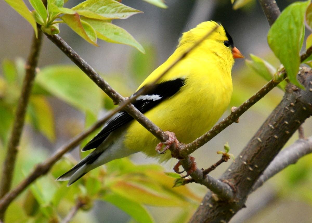 1-birds 020-005.JPG
