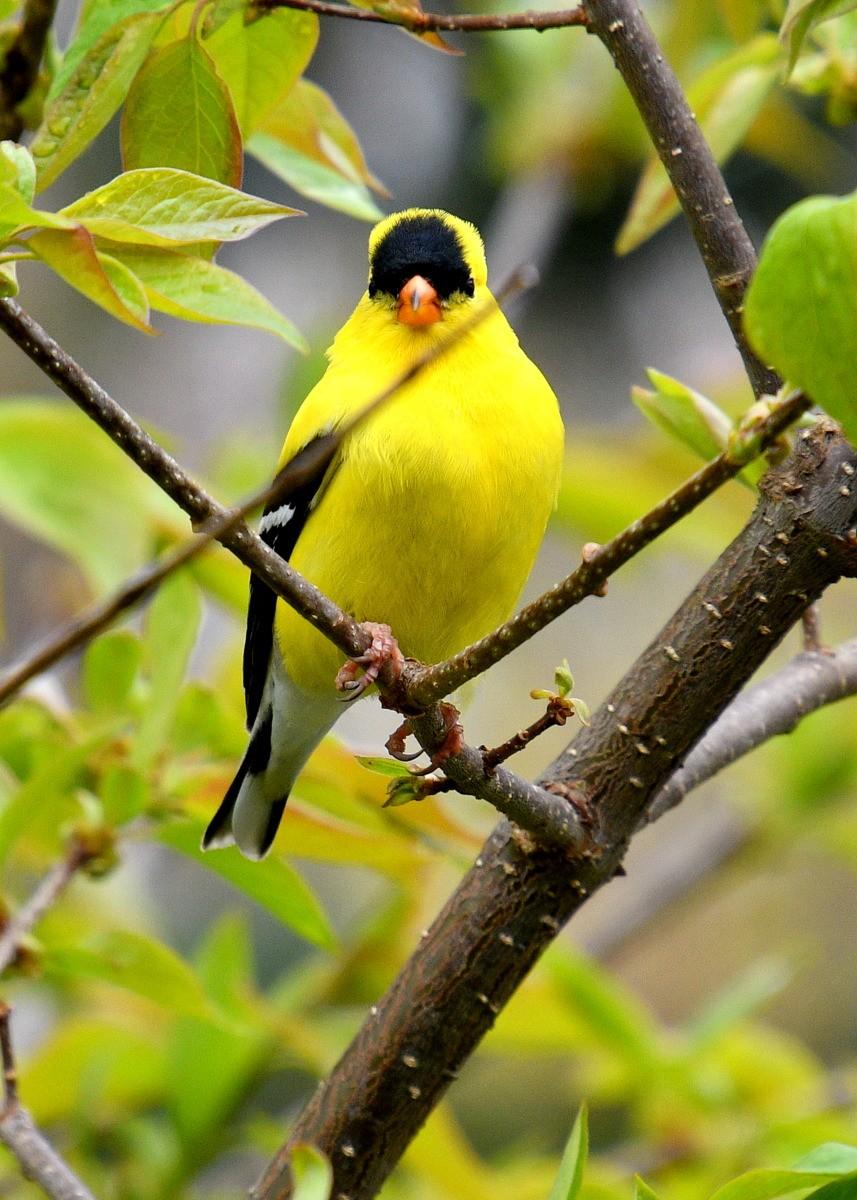1-birds 021-002.JPG