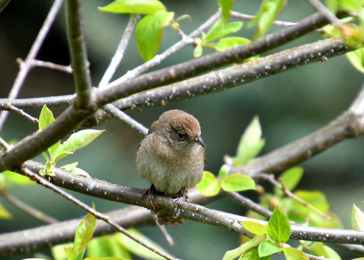 1-birds 022-005.JPG
