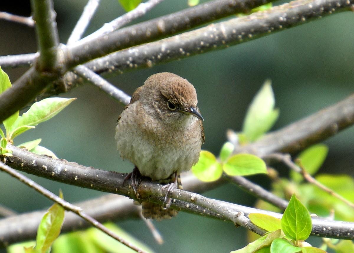 1-birds 022-006.JPG