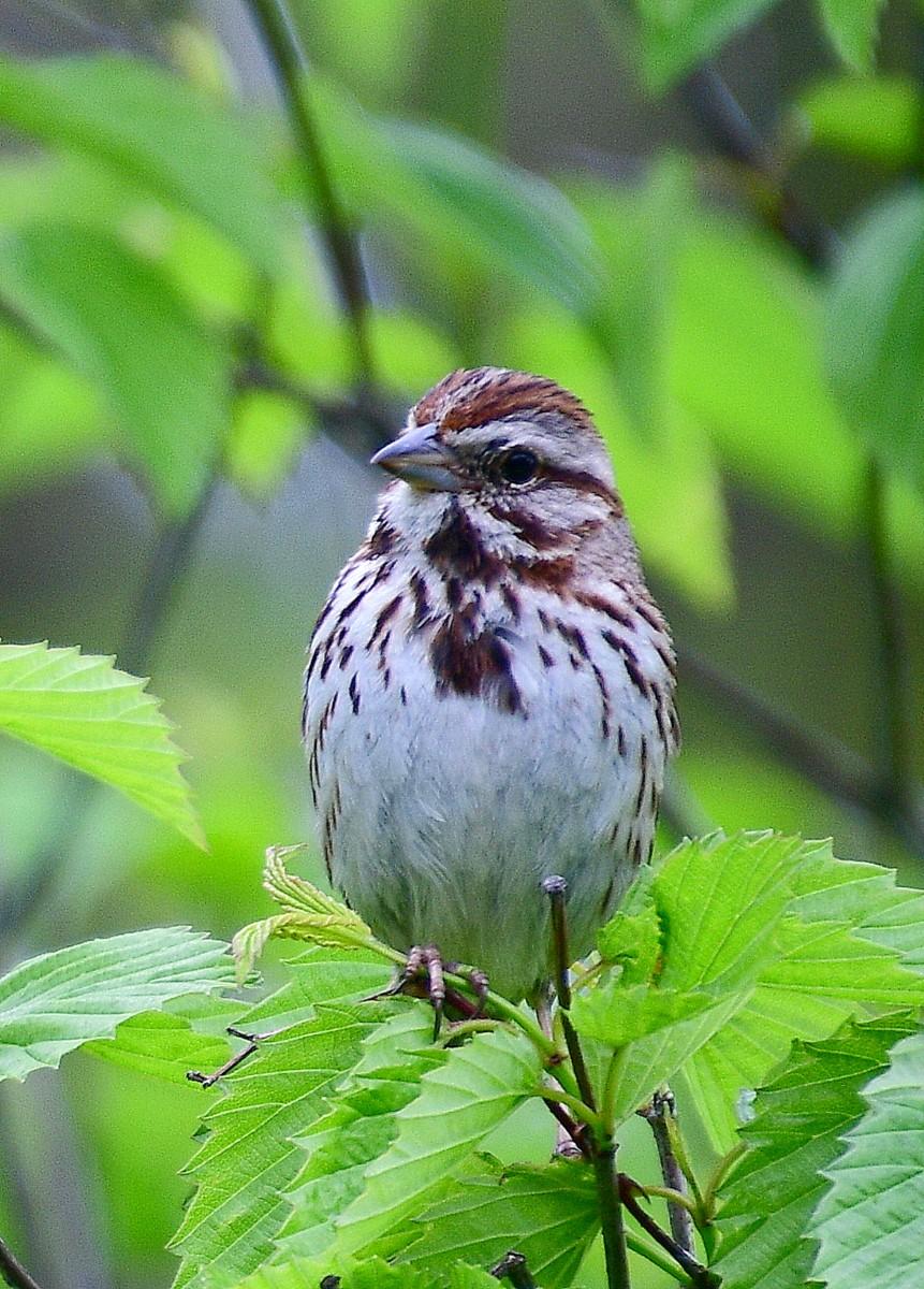 1-birds 029-001.JPG
