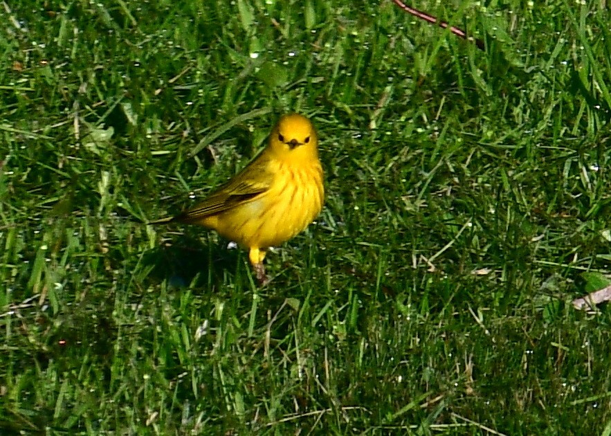 1-birds 030-002.JPG