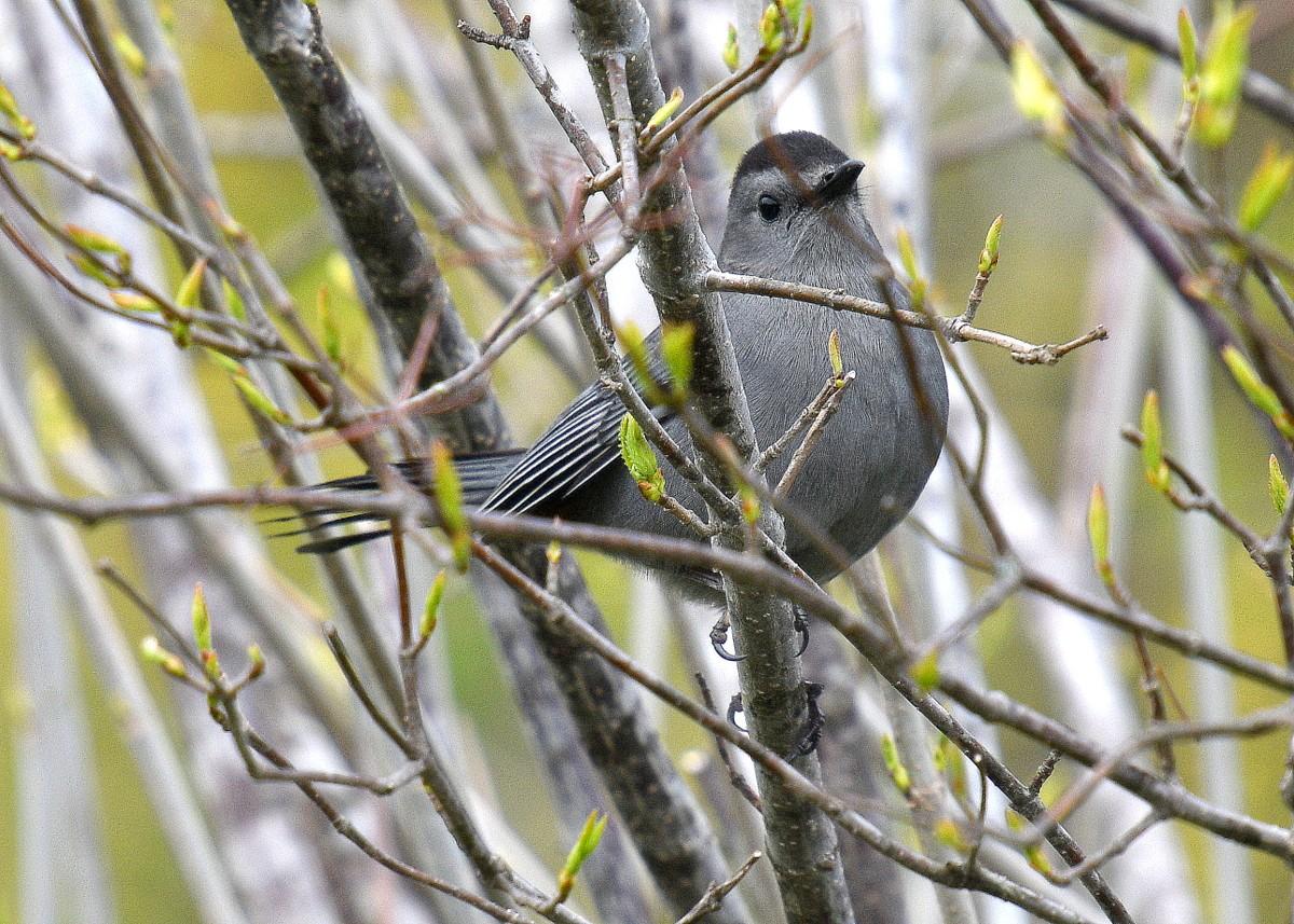 1-birds 031-003.JPG