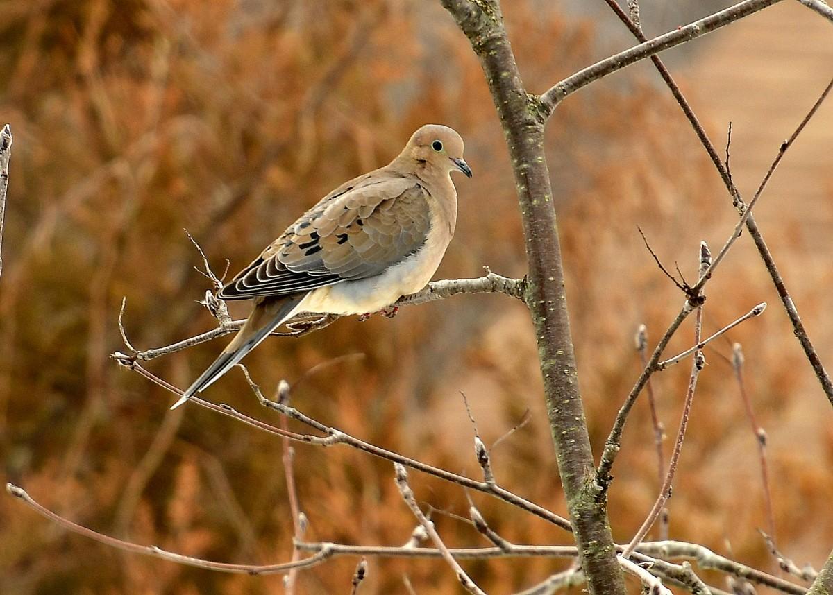 1-birds 033.JPG