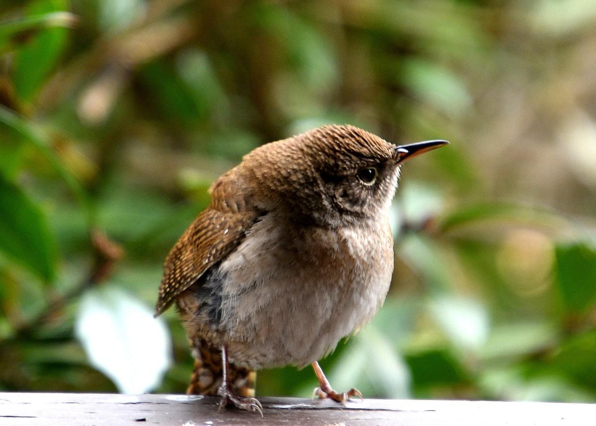 1-birds 039-001.JPG