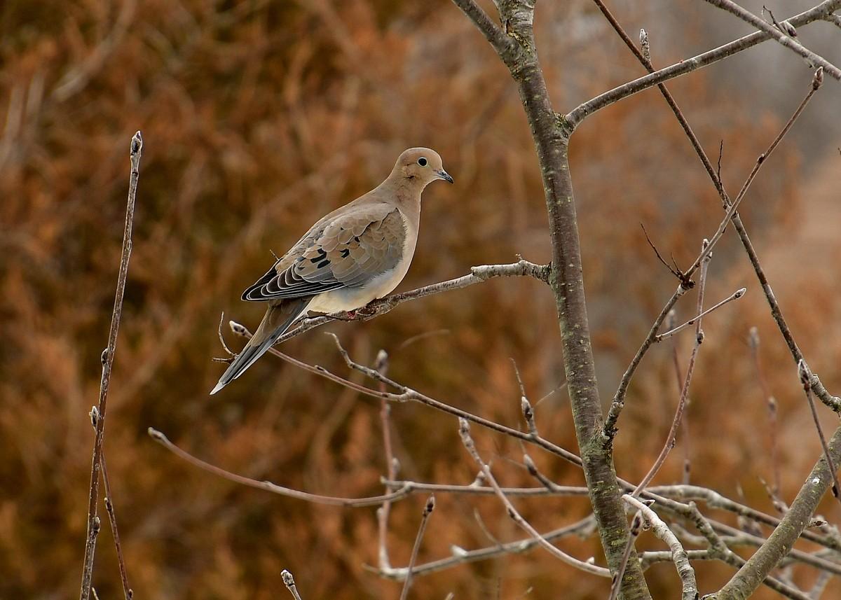 1-birds 039.JPG