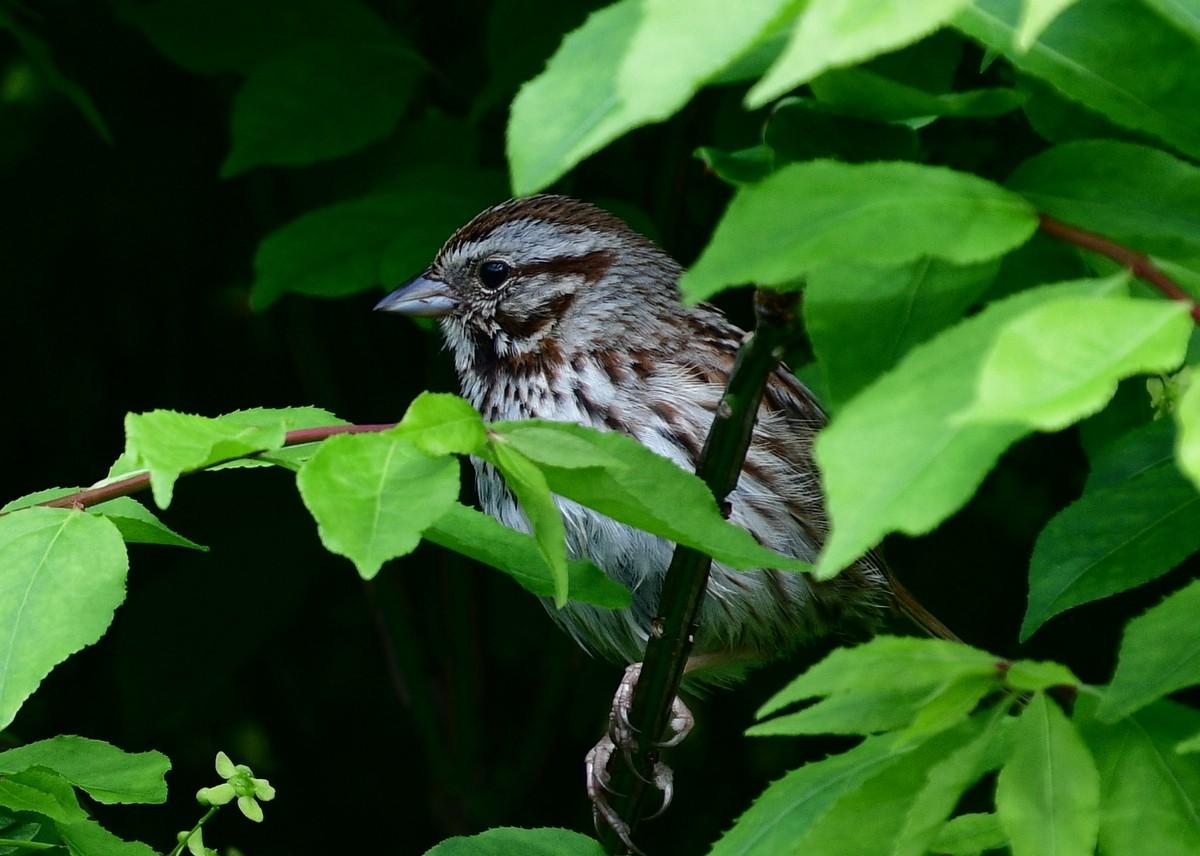 1-birds 053-004.JPG