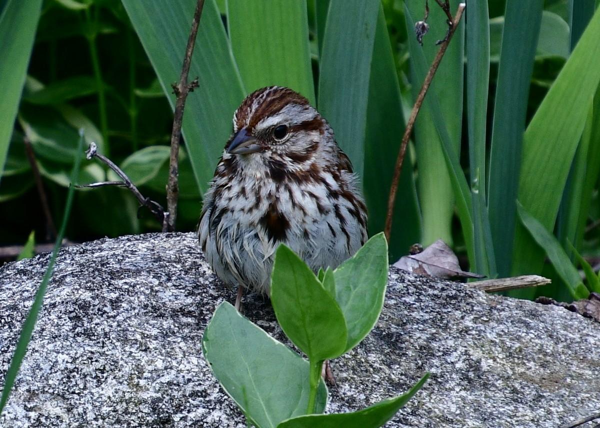 1-birds 062-001.JPG