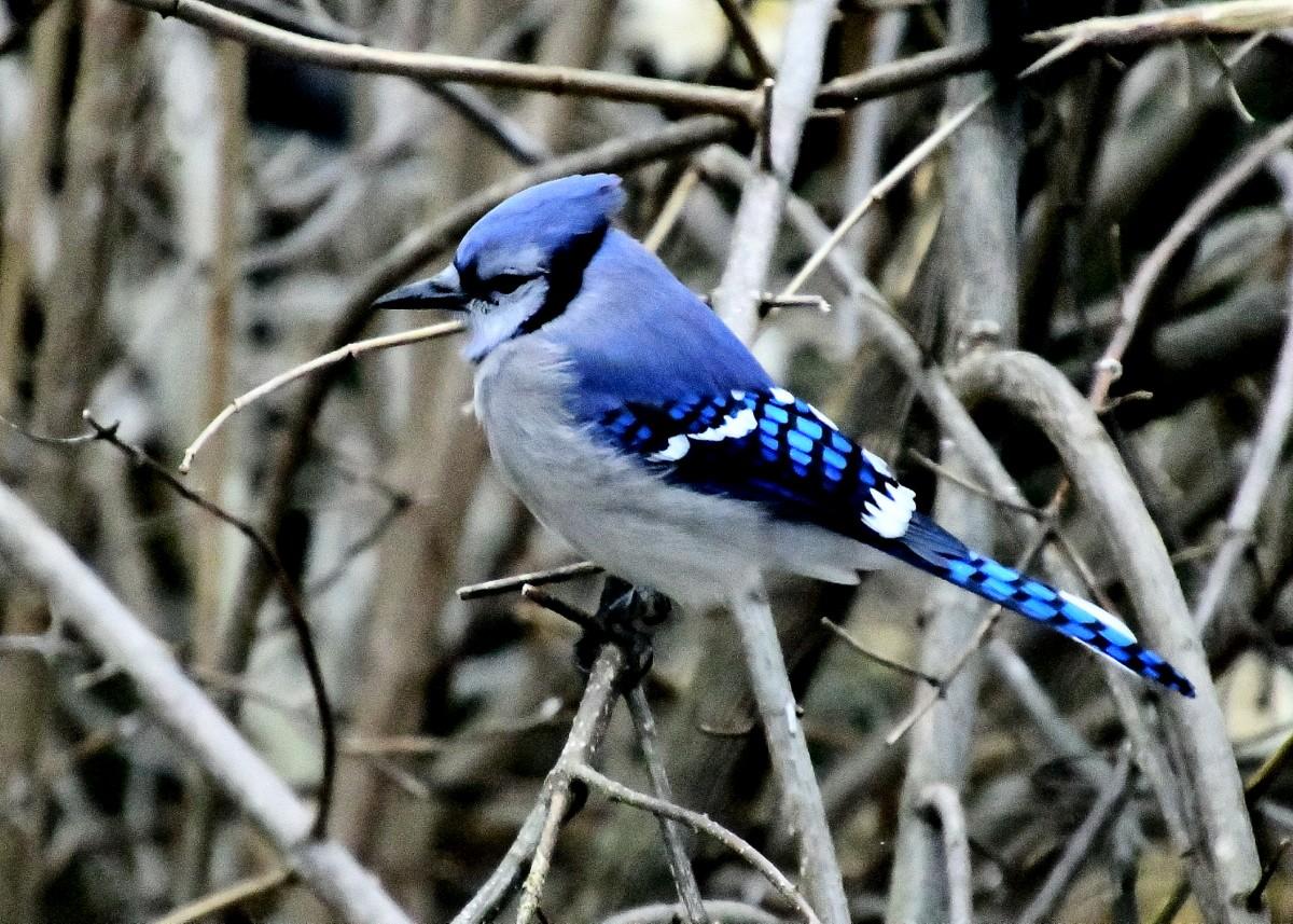 1-birds 067.JPG