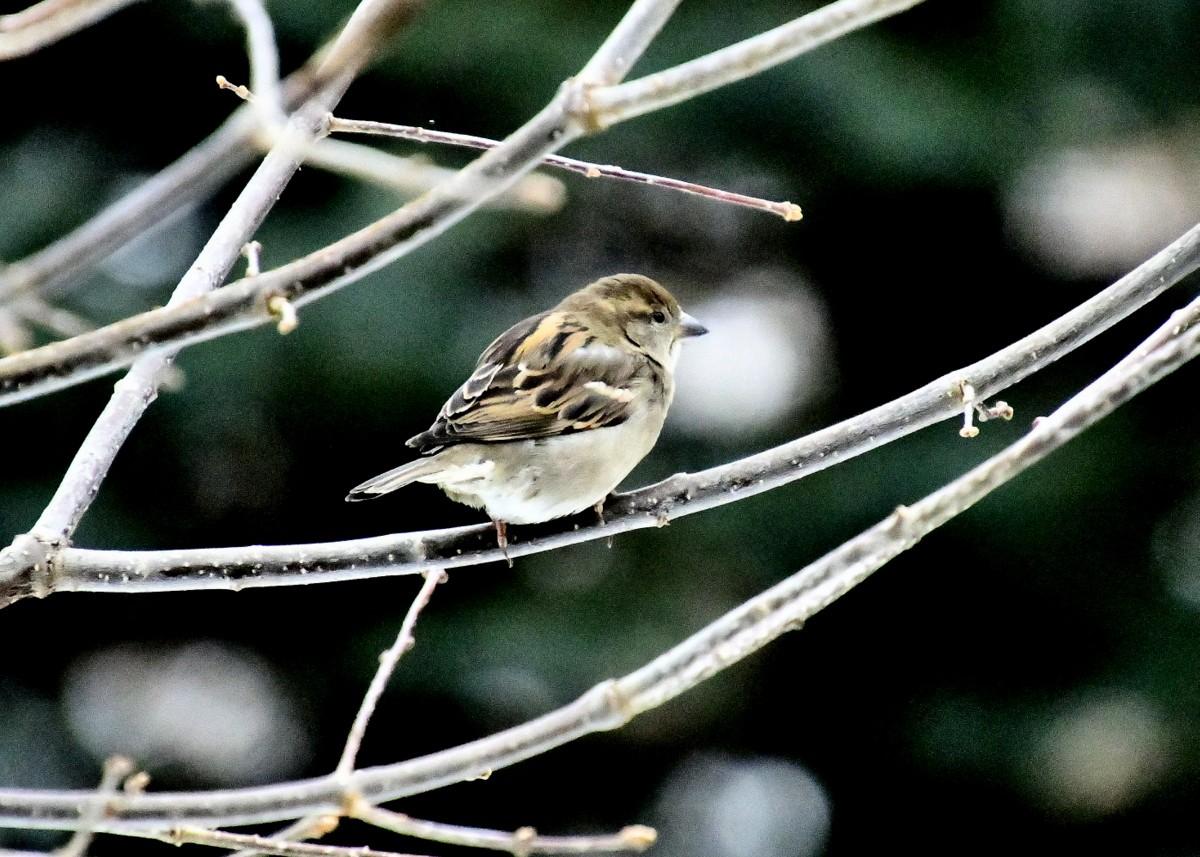 1-birds 092.JPG