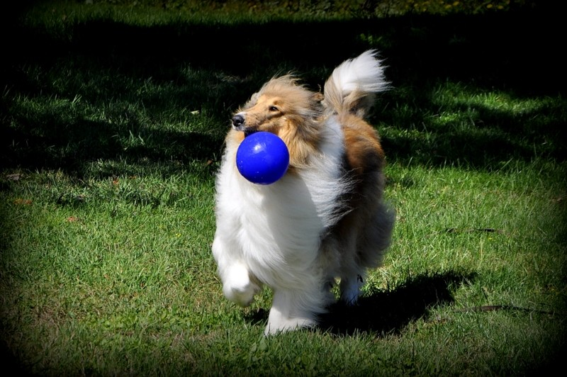 1-play ball 049.JPG