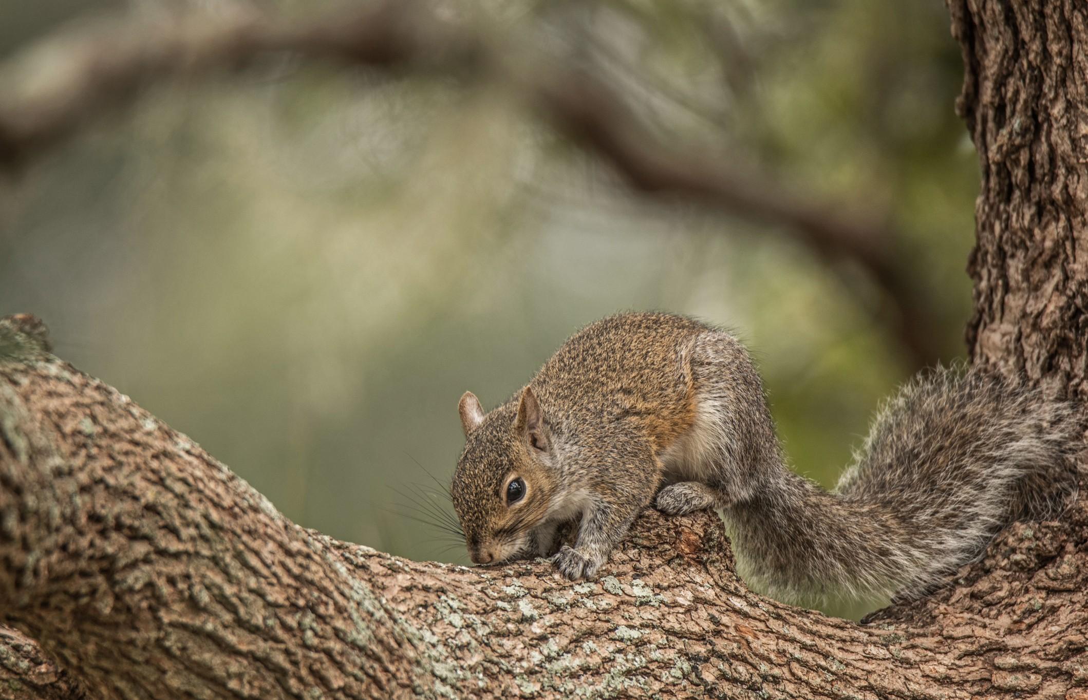 114-Squirrel (2)-f.jpg