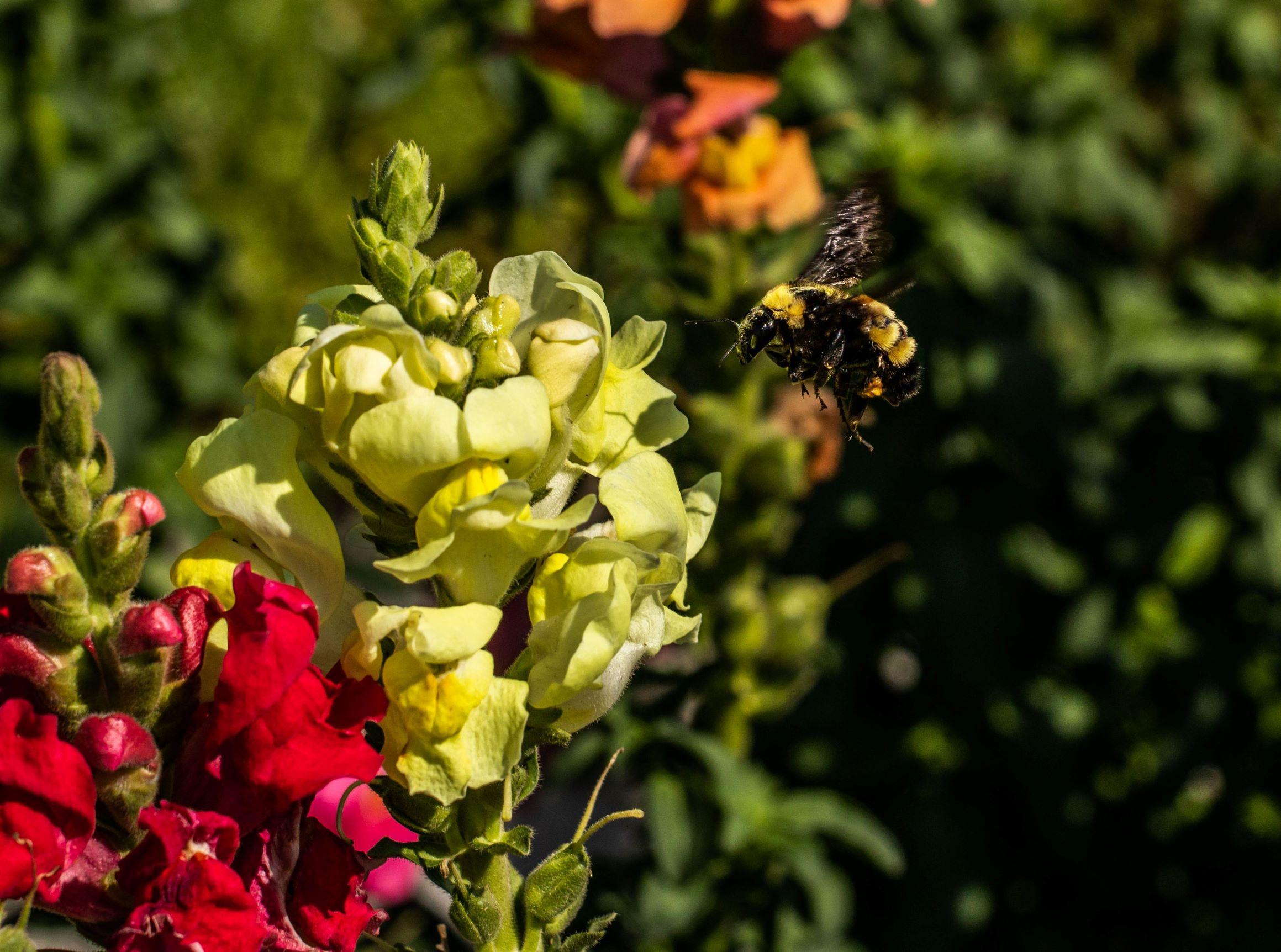 120 bee cvt (2) layer2.jpg