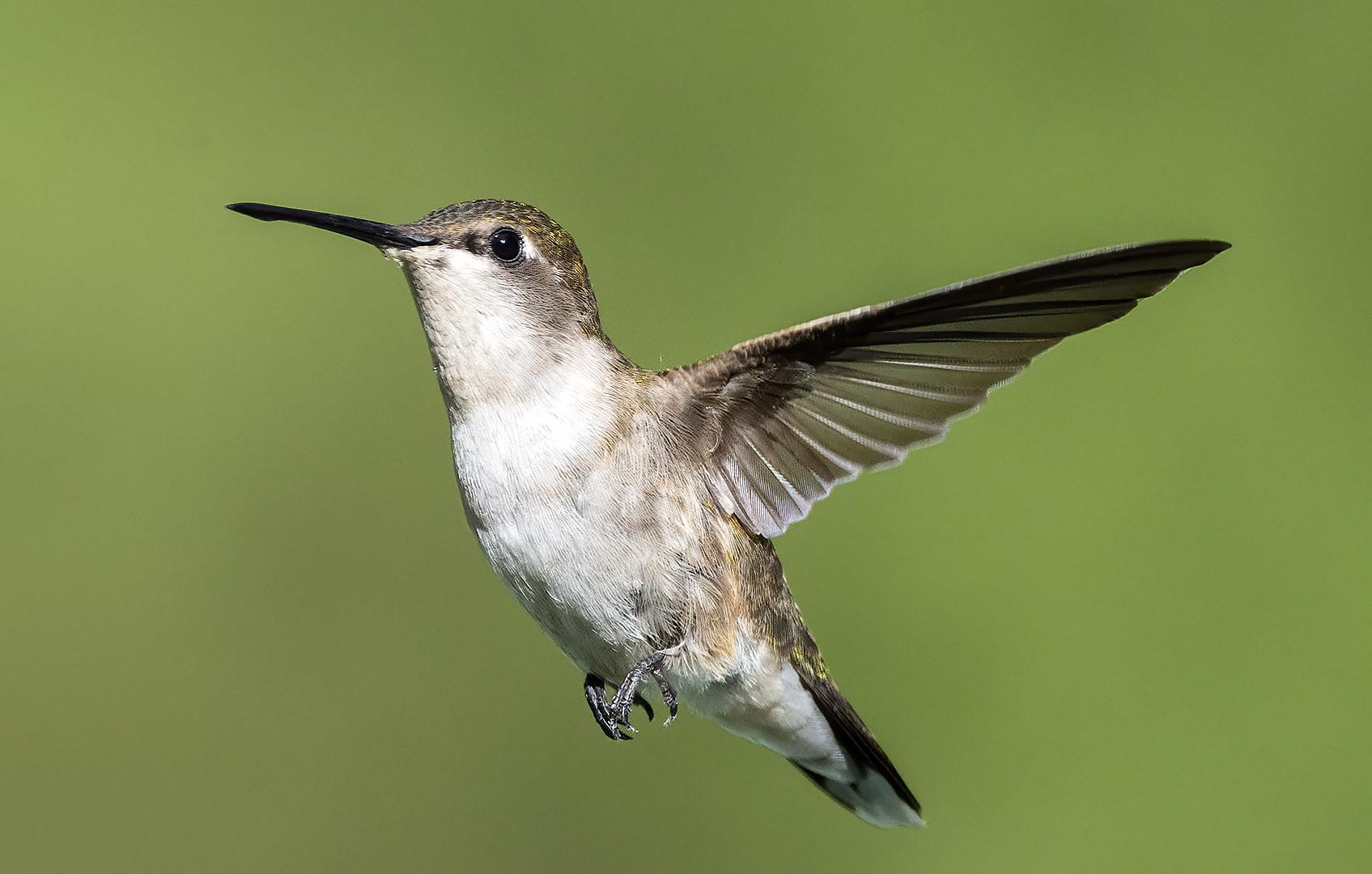 20200601 Hummingbird 3.jpg