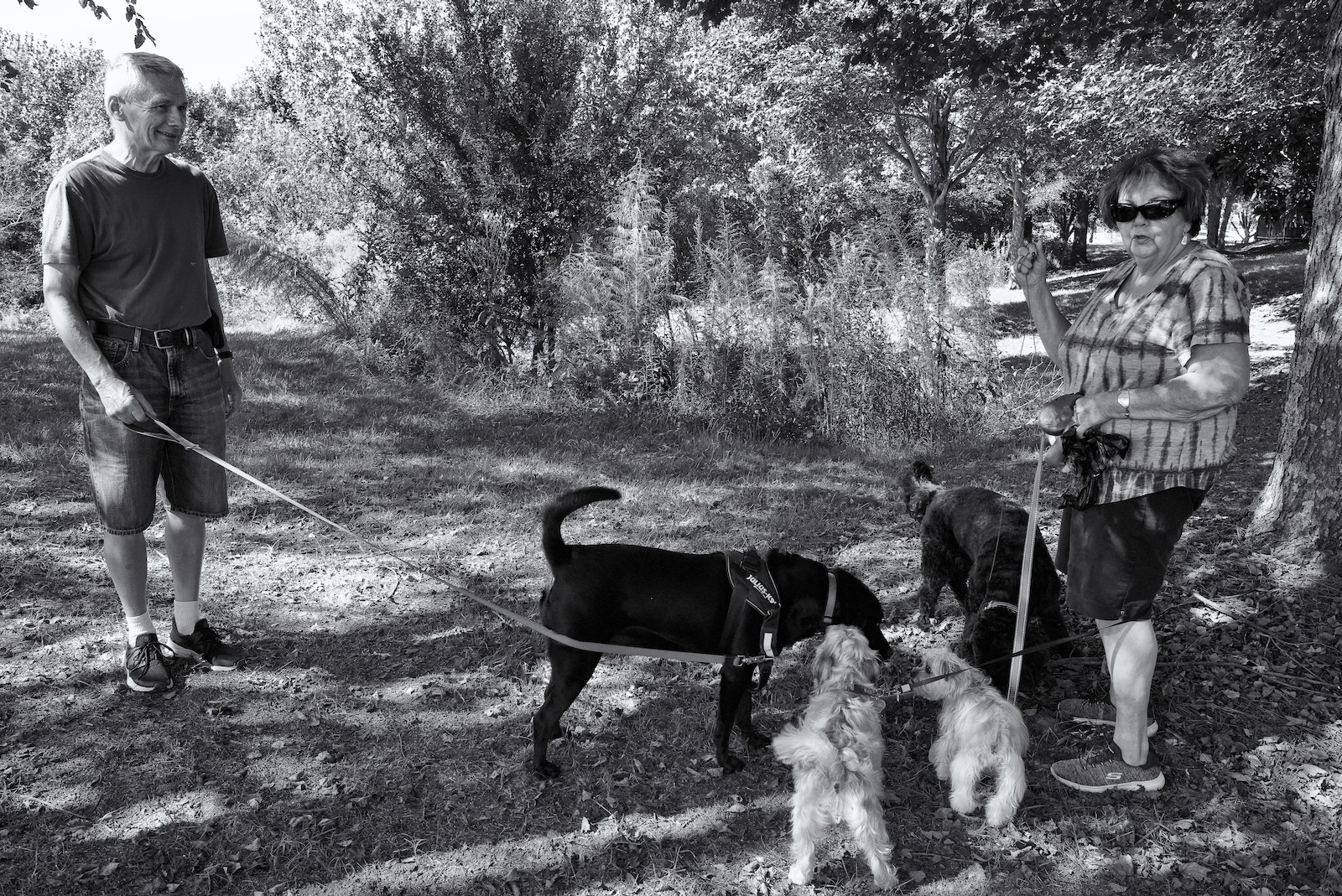 4 dogs, Bob, friend_sm.jpeg