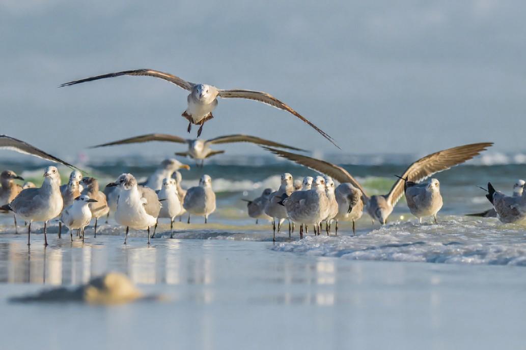 527-seagulls-on-beach-f-3-50%.jpg