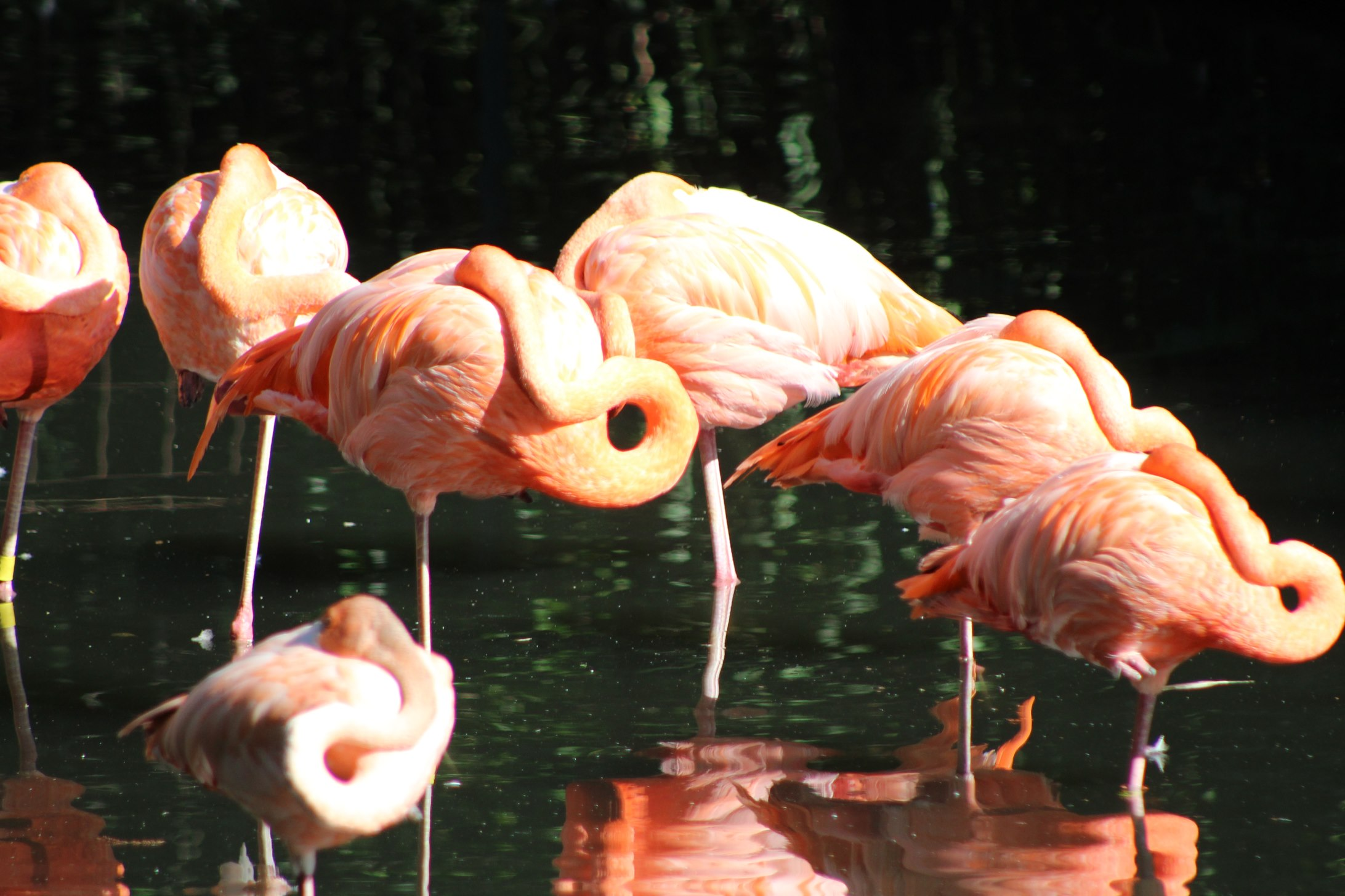 A Day at the Zoo 011.JPG