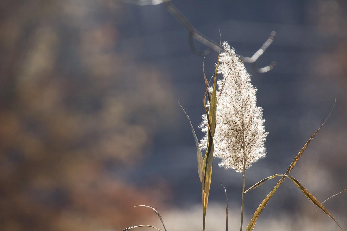 Backlit Flora.JPG