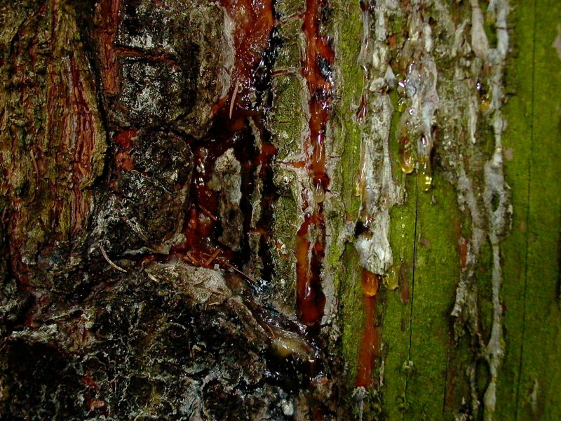 bark close up.jpg
