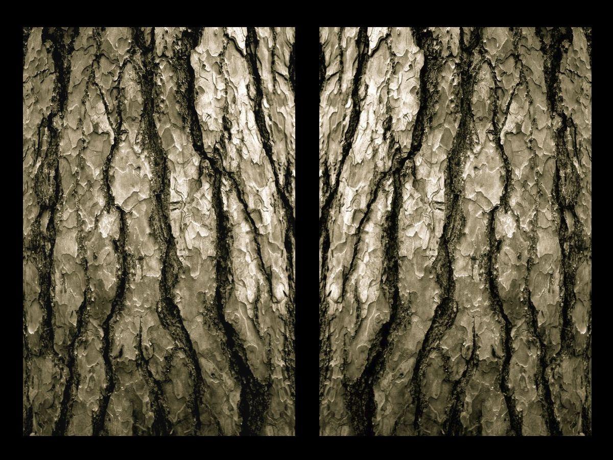 bark frame.jpg