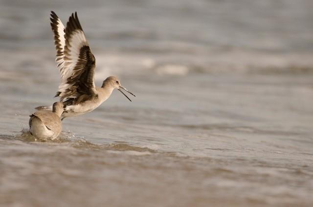 Beach bird 2 (640x424).jpg