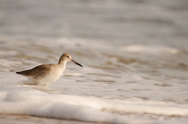 Beach bird 3 (640x424).jpg