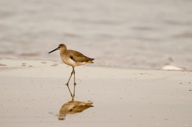 Beach bird (640x424).jpg