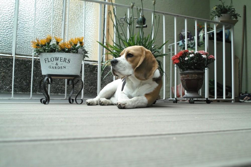 beagle flowerpot - 1.jpg