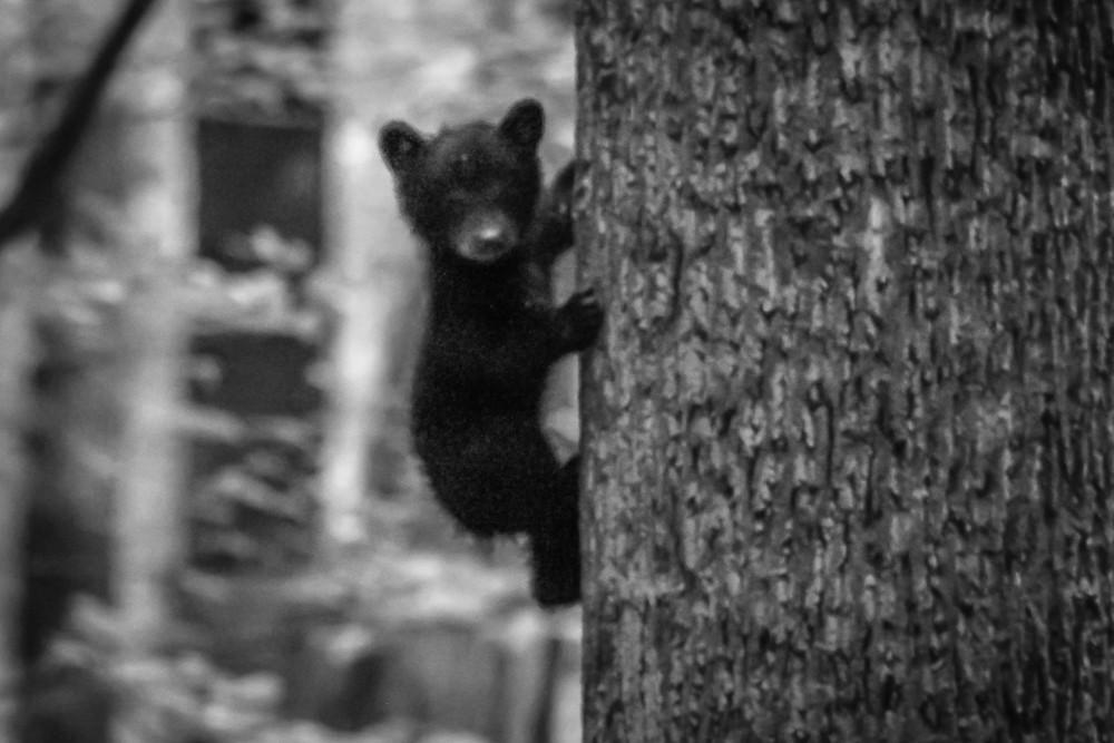 Bear #11 (1 of 1)-2.jpg