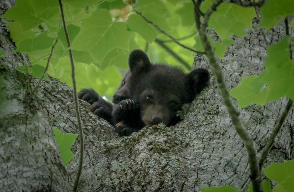 Bear #14 (1 of 1).jpg
