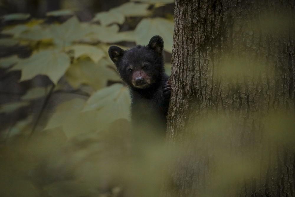 Bear #18 (1 of 1).jpg