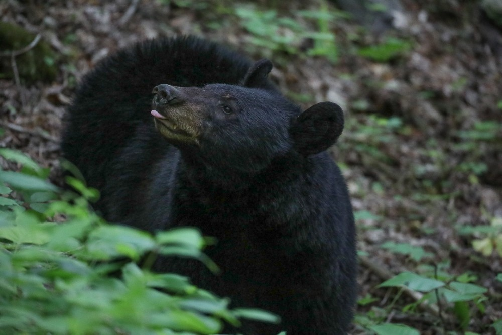 Bear #7 (1 of 1).jpg