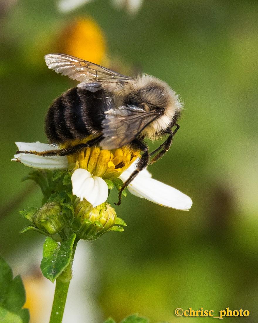 Beeing-Productive.jpg