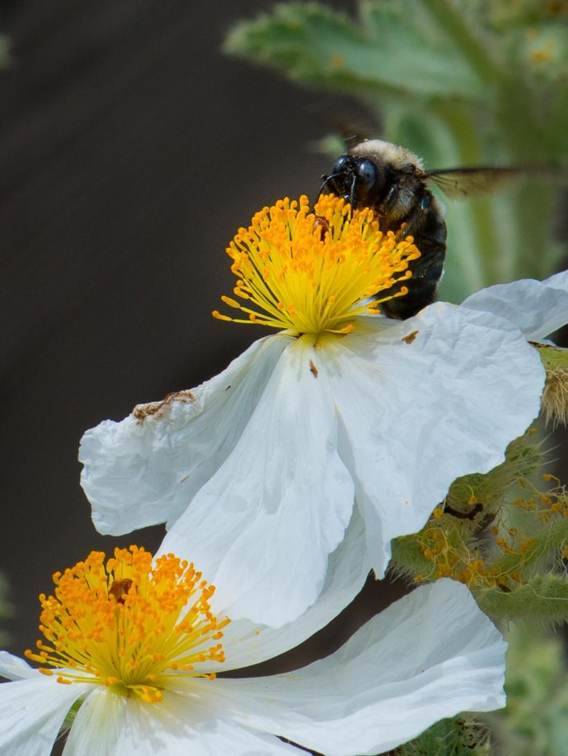 bees-1.jpg