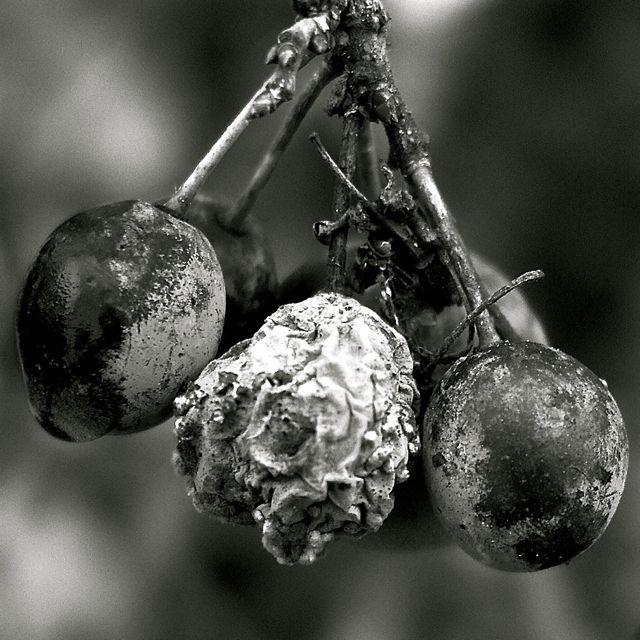 berries macro.jpg