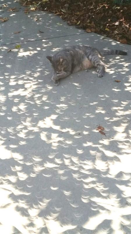 Bex in the eclipse.jpg