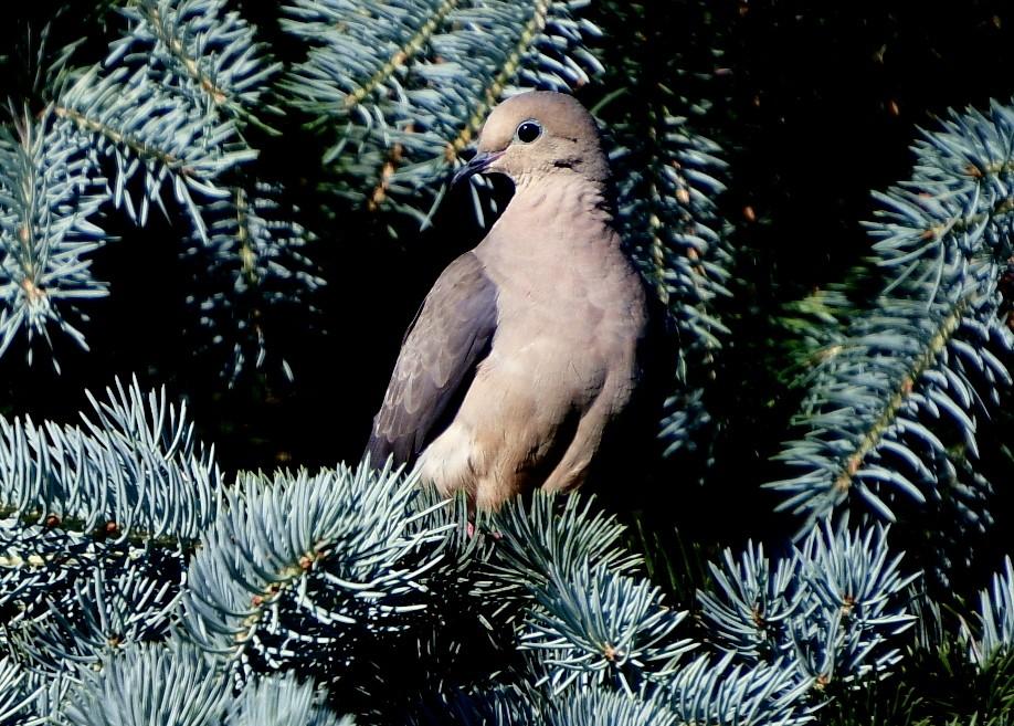 bird 018.JPG