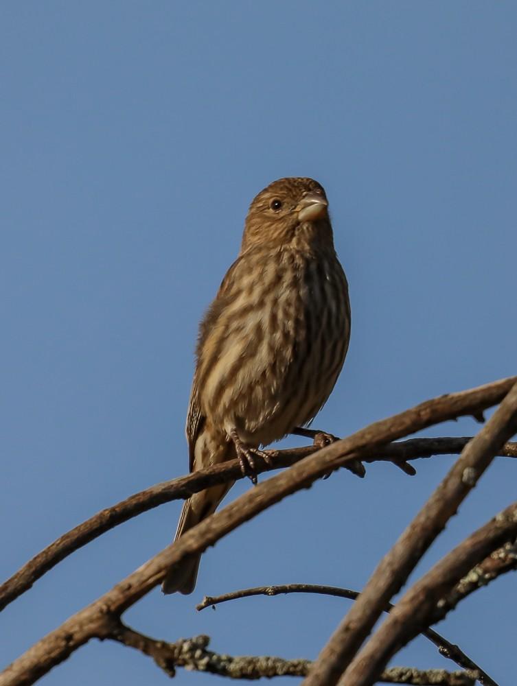 Bird 1 (1 of 1).jpg