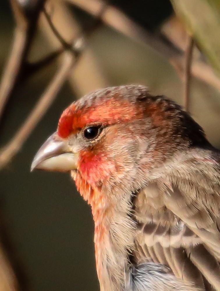Bird 10 (1 of 1).jpg