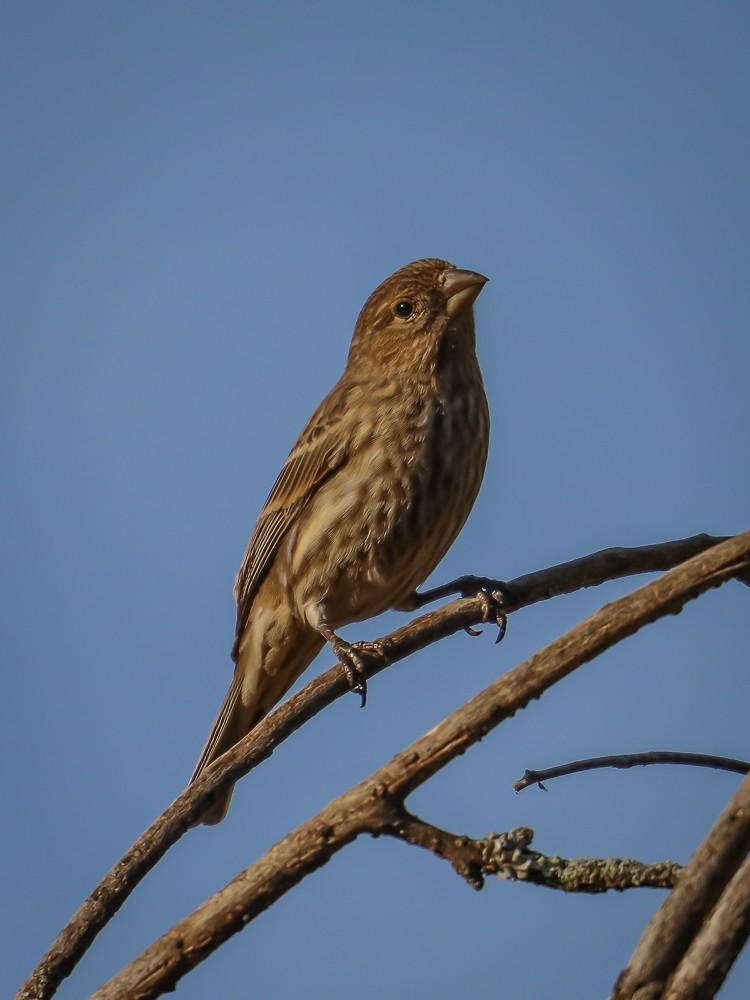 Bird 2 (1 of 1).jpg