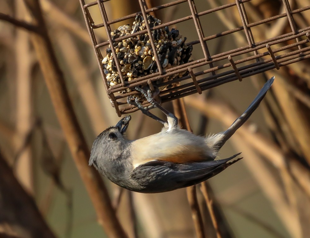 Bird 3 (1 of 1).jpg